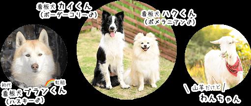 看板犬とワンちゃん