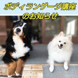 犬のボディランゲージ…それだけ聞くと「それって何?」って思いませんか?わんこ初心者の私だけでしょうか… 犬は人間のように会話をしないぶん、体全体を使って気持ちを表現しますよね犬の気持ちを理解するには、犬のボディランゲージを知ることが飼い主さんにとって、とても大事だとランで見ていて思ったので、講座をお願いしました愛犬の行動を観察すると徐々に「こう言いたいんだろうなぁ」というのはわかってくるものだと思いますが、今回はより詳しく・そして気軽に質問などをしてもらう時間をとりながら、知識を深めることができますぜひこの機会を利用してしてみてください 【日時】9月18日(月曜・祝日)午前10時〜11時講座終了後、11時~ ティータイム(質問などお気軽に♪)12時頃終了の予定です。 【参加費】3,000円(税込)参加費には、テキスト代、室内施設利用料、1ドリンクが含まれています※ランを使用される場合は別途700円/1頭目室内での講座ですわんちゃんと一緒に受講もできます予約制となっておりますので、参加を希望される方はわんこ村携帯にお電話いただくか、インスタのメッセージよりお待ちしております
