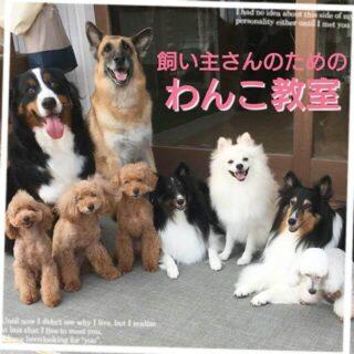 9月より『飼い主さんのためのわんこ教室』を毎月開催することになりました。