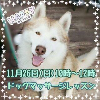 11月26日(日)はドッグマッサージレッスン(冬に向けての愛犬ケア)