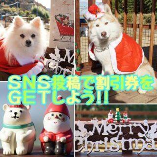 『わんこ村2017クリスマス』写真投稿で割引券をGET!