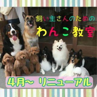 4月から『 飼い主さんのためのわんこ教室』がリニューアル!