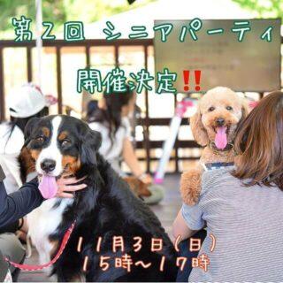 幸せな老犬ライフ応援プロジェクト「第2回 シニアパーティ」開催
