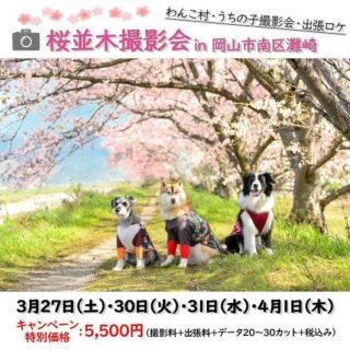 桜並木撮影会 in 岡山南区灘崎